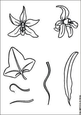 bloemdeel