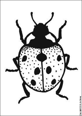 lievenheersbeestje