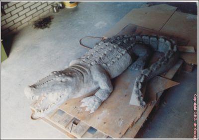 krokodil4