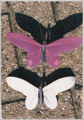 vlinder01s