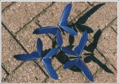 vlinder03
