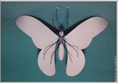 vlinder05b