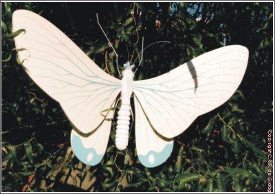 vlinder11b